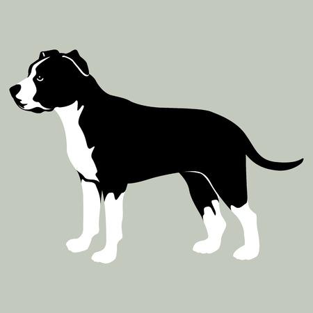 American Staffordshire Terrier Illustration Stil flach Standard-Bild - 63859504