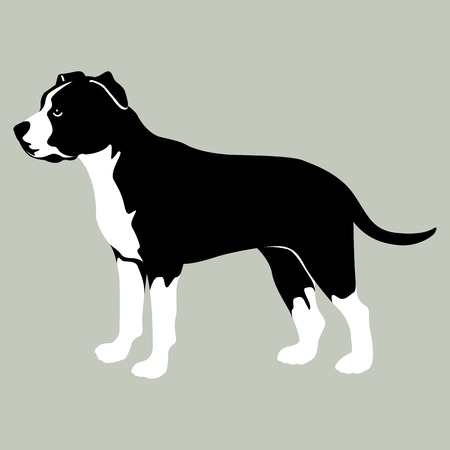 American Staffordshire Terrier illustration style flat