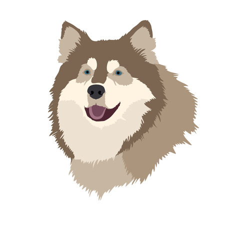 husky dog head face realistic illustration