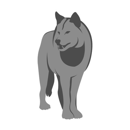 adult wolf illustration