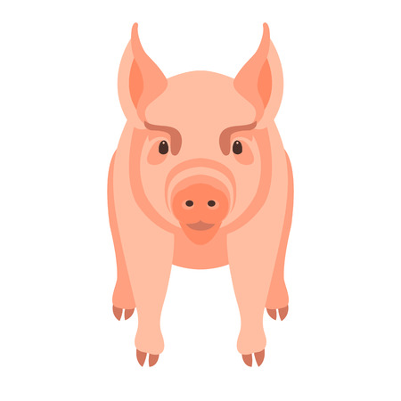 young pig vector illustration style Flat Illustration