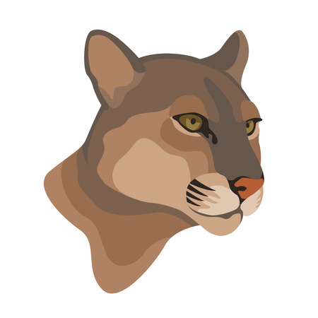 cougar mountain lion head vector illustration Illustration