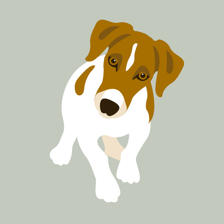cute dog: Terrier russell vector illustration style Flat front