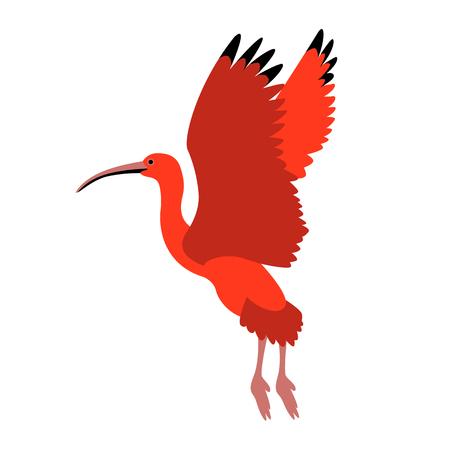 Scarlet ibis vector illustration style Flat side Illustration