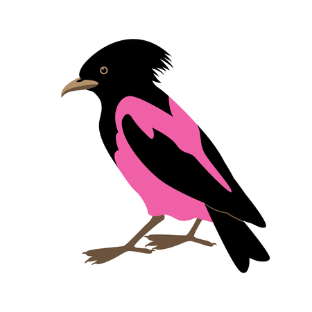 starling: rose-colored starling vector illustration style Flat
