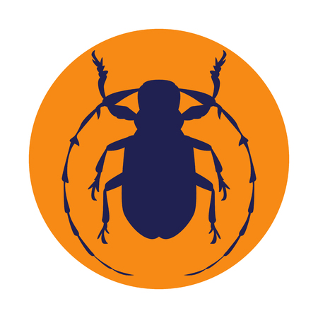 beetle vector illustration style Flat