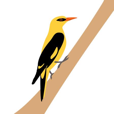 indian golden oriole vector illustration style Flat
