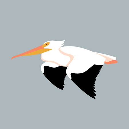 Pelican bird vector illustration style Flat