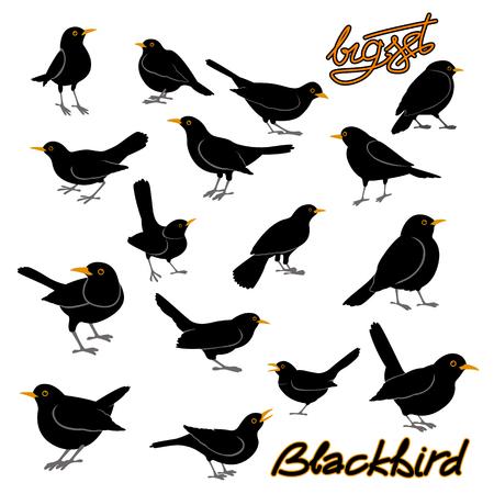 Blackbird style illustration vectorielle