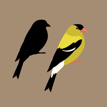 American goldfinch vector illustration style flat side set silhouette
