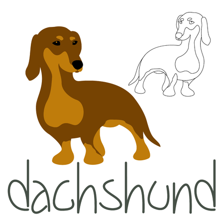 Dachshund dog set vector illustration style Flat