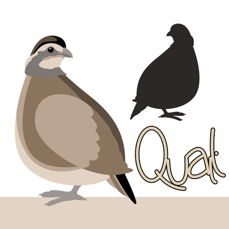 Bird quail vector illustration style Flat black silhouette
