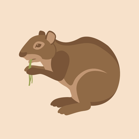 agouti: Agouti vector illustration style flat side Illustration