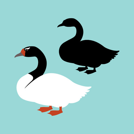 Black-necked swan vector illustration style flat silhouette black Illustration