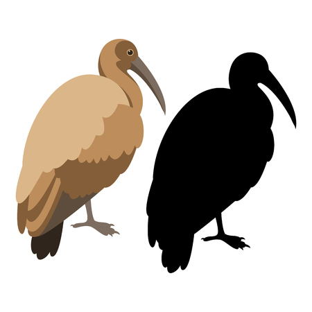 Ibis bird vector illustration flat style black silhouette black