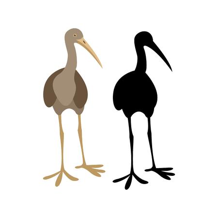 Limpkin crane bird illustration Illustration
