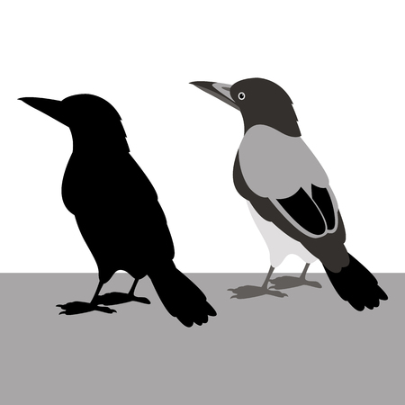 Magpie vector illustration black silhouette set Illustration