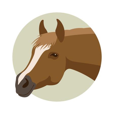 Tête de cheval Banque d'images - 84216215