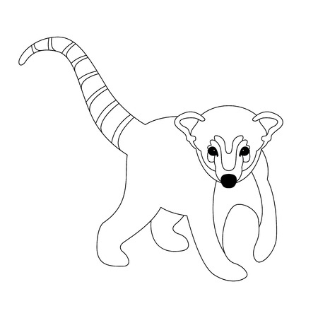 coati vector illustration front side line drawing