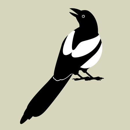 magpie vector illustration style flat