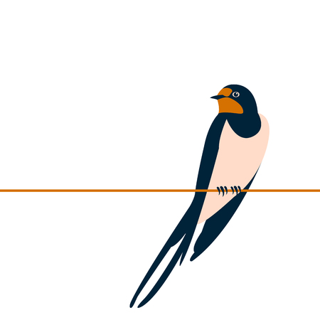 swallow vector illustration style flat side front