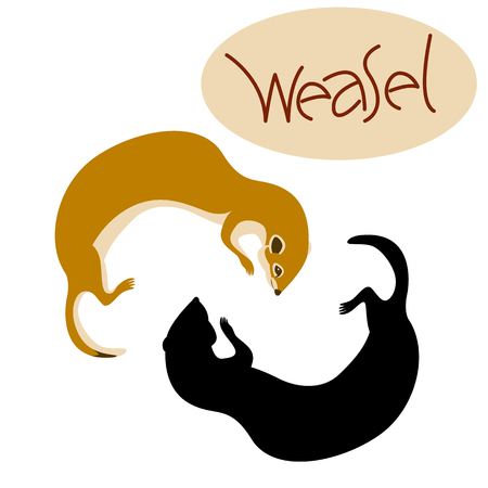 Weasel illustration.