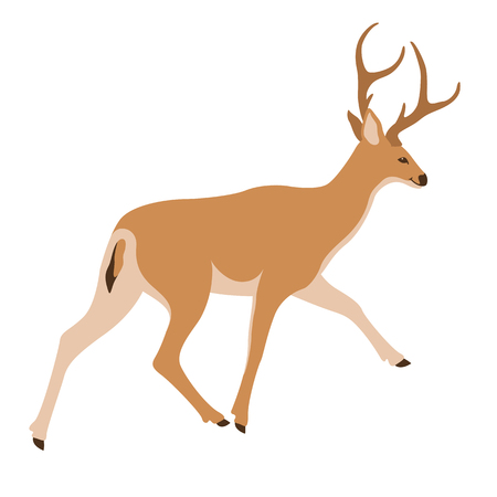 Deer vector illustration flat style