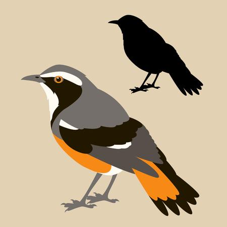 Black bird silhouette illustration. Illustration