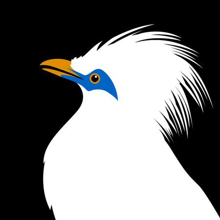 bali mynah bird head vector illustration