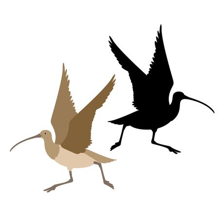curlew bird black silhouette vector illustration