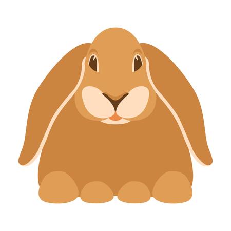rabbit cartoon vector illustration