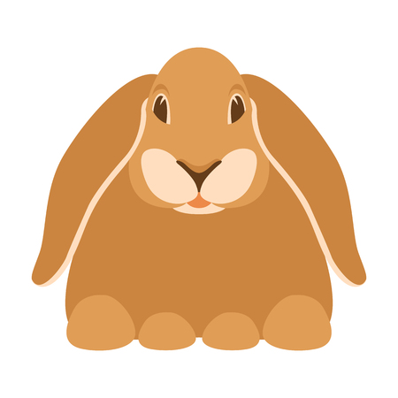rabbit cartoon vector illustration