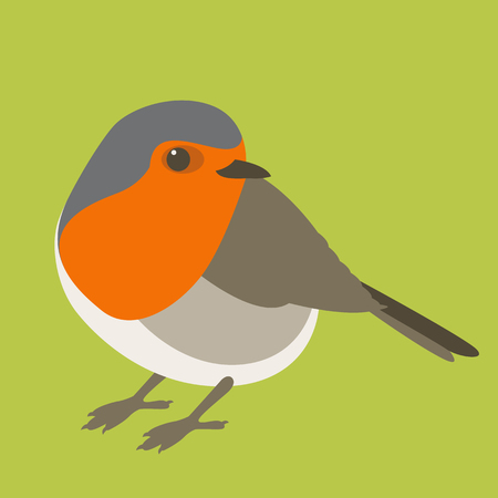 A robin bird vector illustration flat style front view