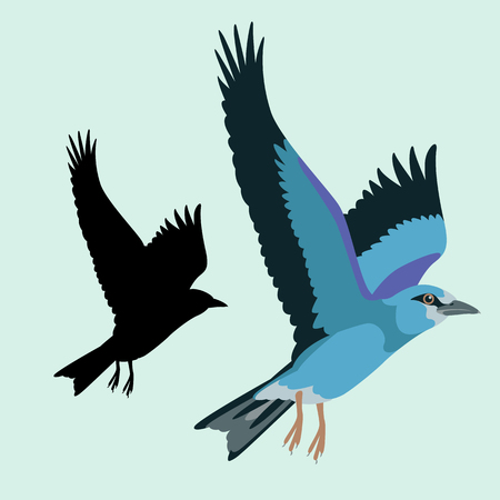 Roller bird vector illustration flat style black silhouette set.