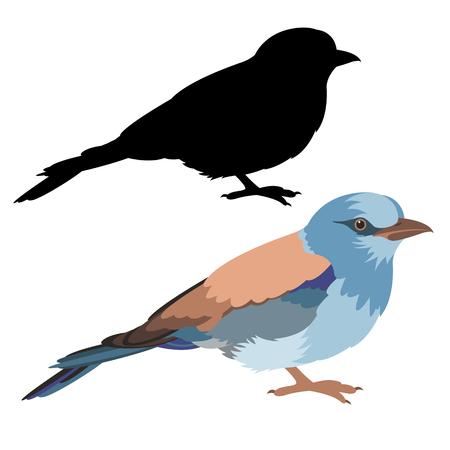 Roller bird vector illustration flat style black silhouette set.