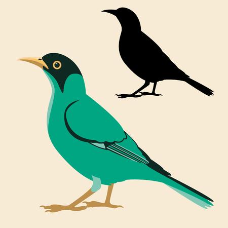 honeycreeper bird vector illustration flat style black silhouette set