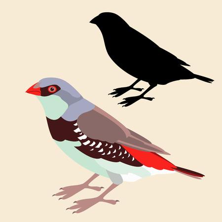 amadine vogel vector illustratie vlakke stijl zwart silhouet set