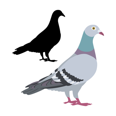 pigeon  bird vector illustration flat style black silhouette set