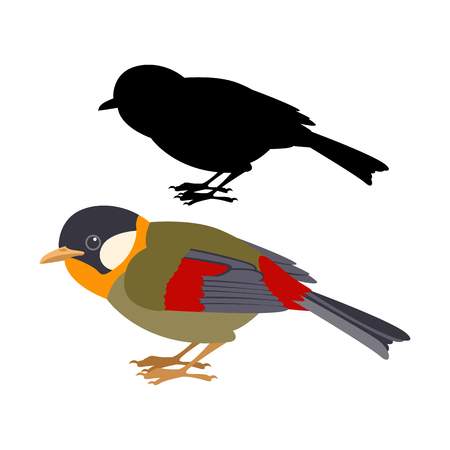 Gouldian Finch vector illustration. Flat style, black silhouette.