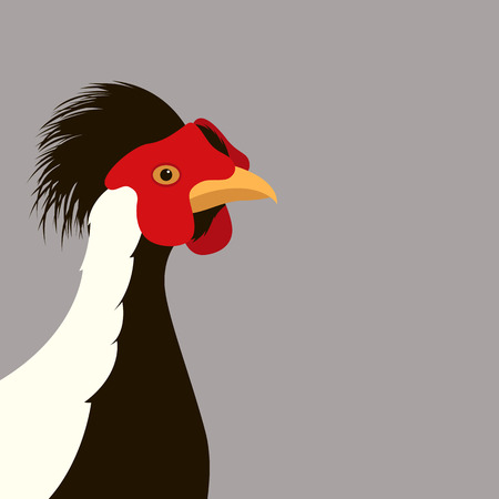 Silver pheasant head vector illustration. Flat style, front side. Illustration