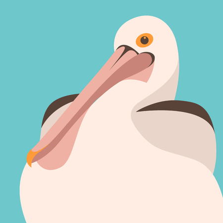 Pelican head vector illustration. flat style, front side.