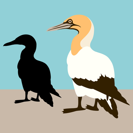Cormorant white vector illustration flat style profile side. Illustration