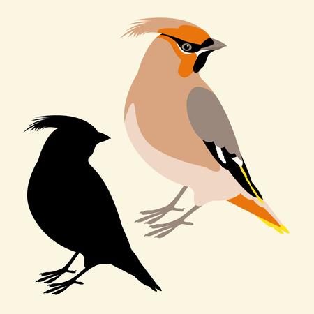 Cedar bird vector illustration flat style profile side silhouette.