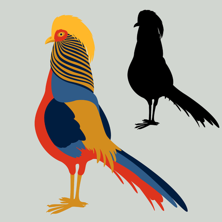 Pheasant vector illustration flat style profile side black silhouette.