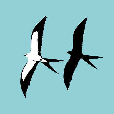 swallow - tailed kite vector illustration flat style    profile  black silhouette