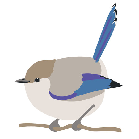 fairy wren bird vector illustration flat style  profile Illustration