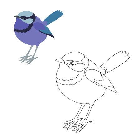 fairy wren bird vector illustration  coloring page outline  Illustration