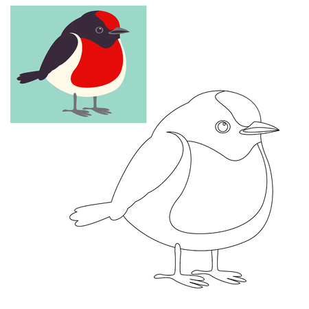 red capped robin bird vector illustration Illustration