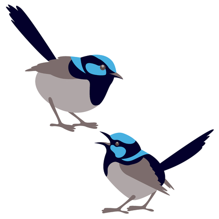 fairy wren bird vector illustration flat style set