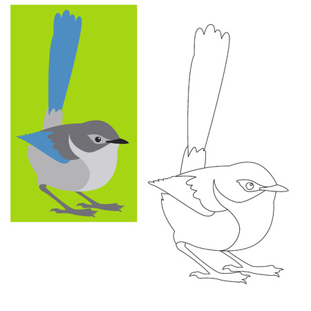 fairy wren bird vector illustration  coloring page outline  Ilustração